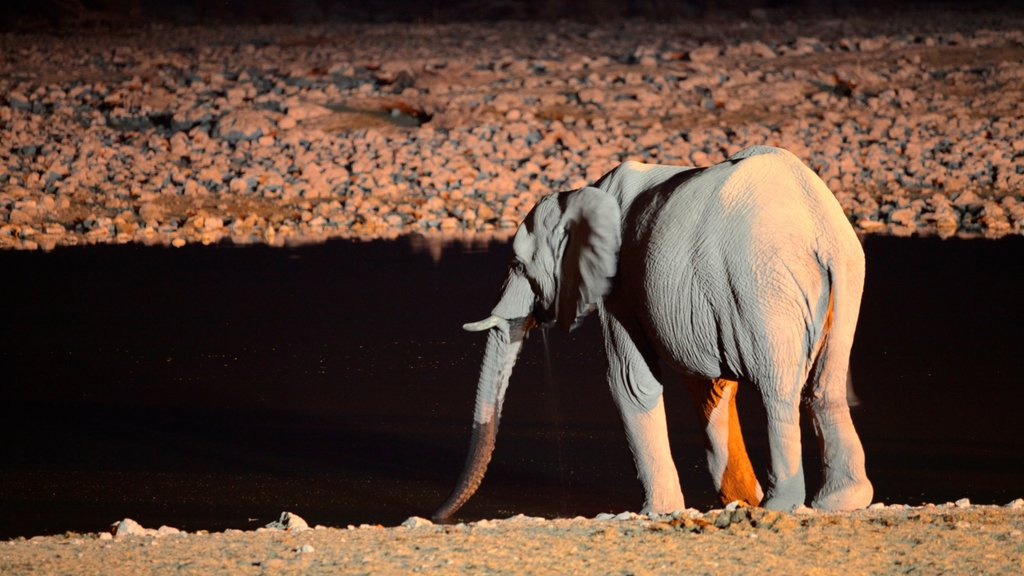 Parque nacional Etosha mostrando animales terrestres y escenas nocturnas