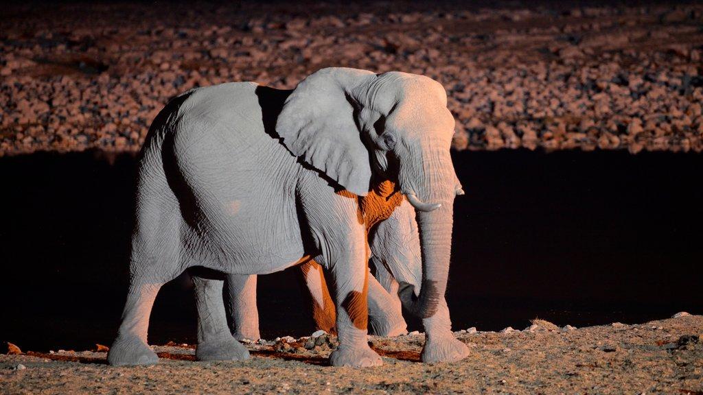 Parque nacional Etosha que incluye animales terrestres y escenas nocturnas