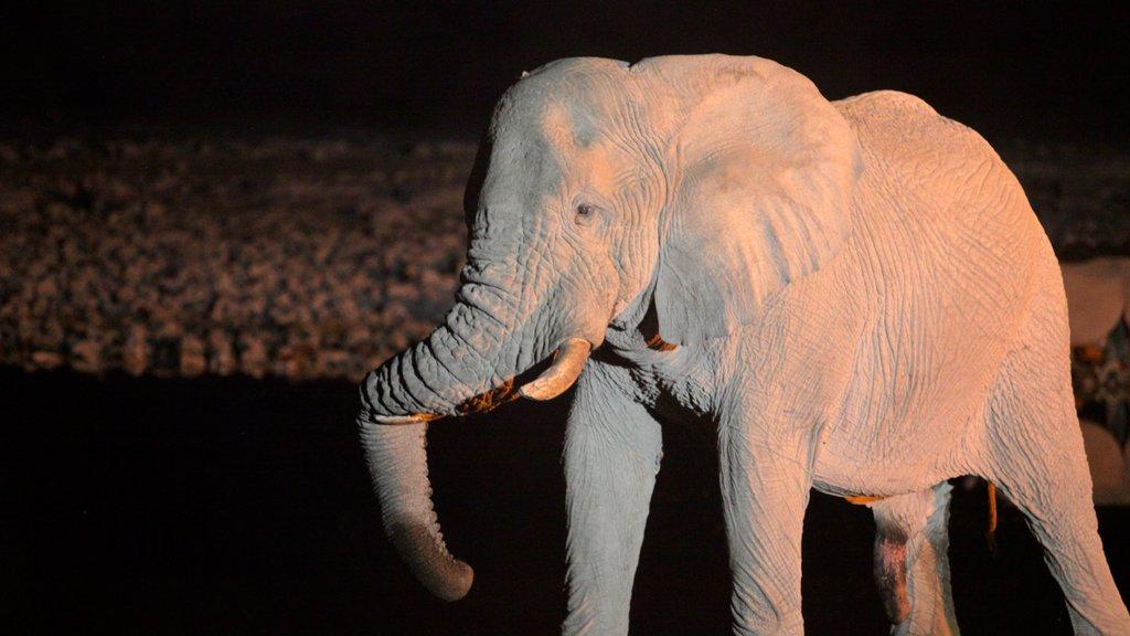Parque nacional Etosha ofreciendo animales terrestres y escenas nocturnas