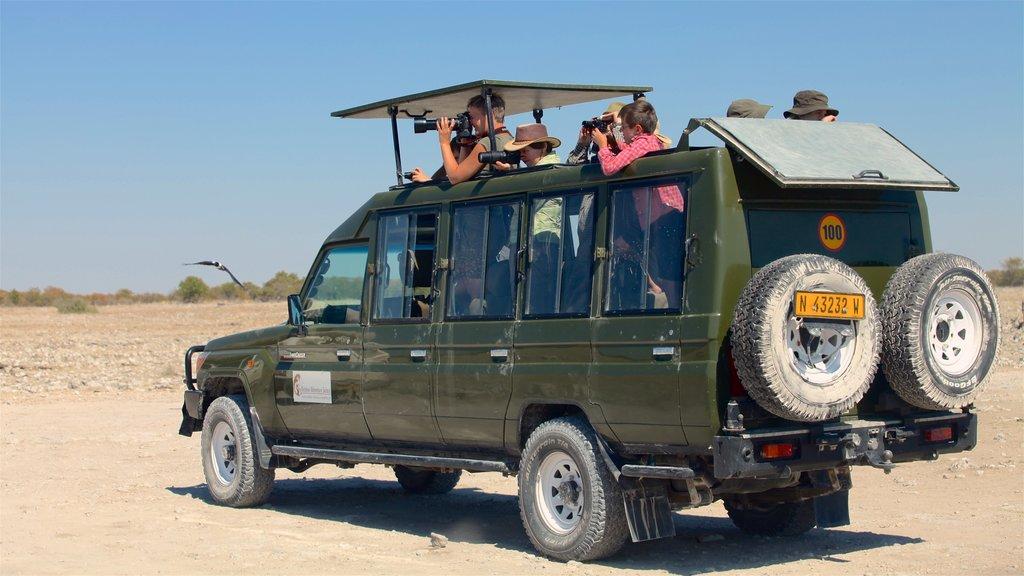 Parque nacional Etosha ofreciendo aventuras de safari y manejo fuera de carretera y también un pequeño grupo de personas