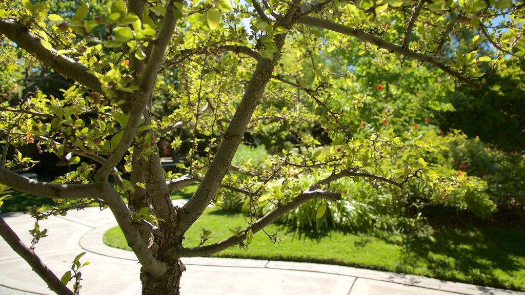 Rancho San Rafael Park que incluye un parque