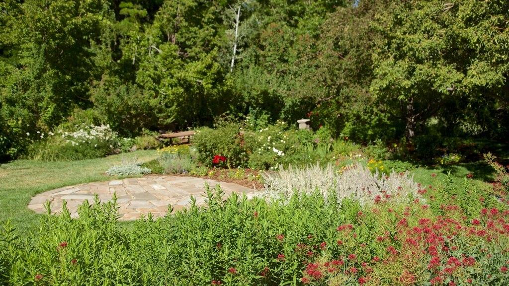 Rancho San Rafael Park mostrando flores silvestres y un jardín