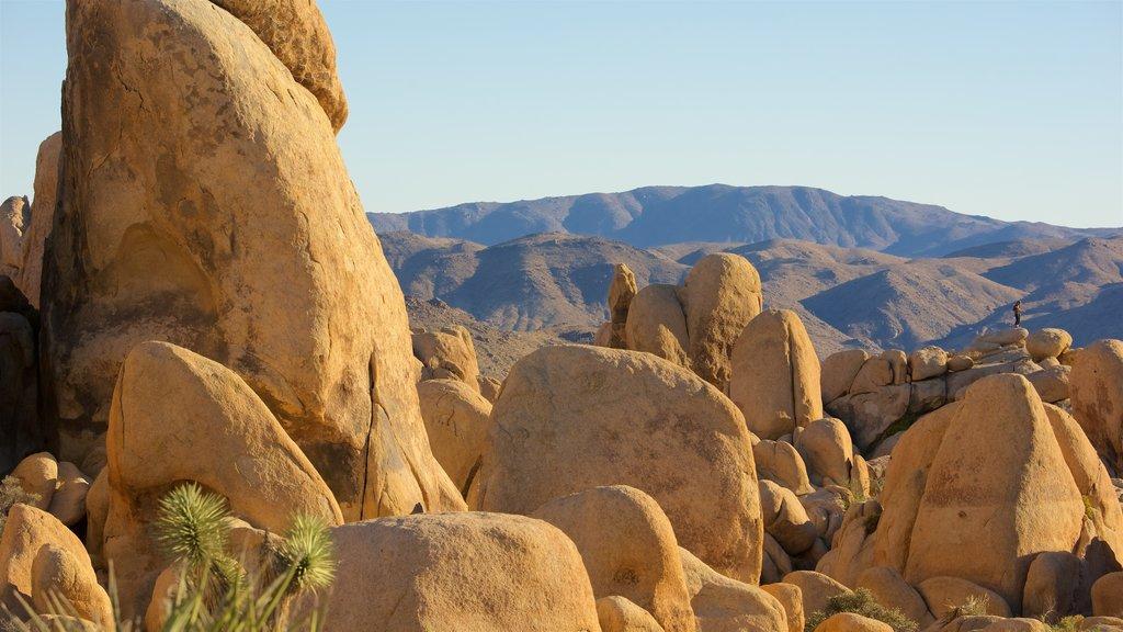 Parque Nacional Joshua Tree mostrando escenas tranquilas