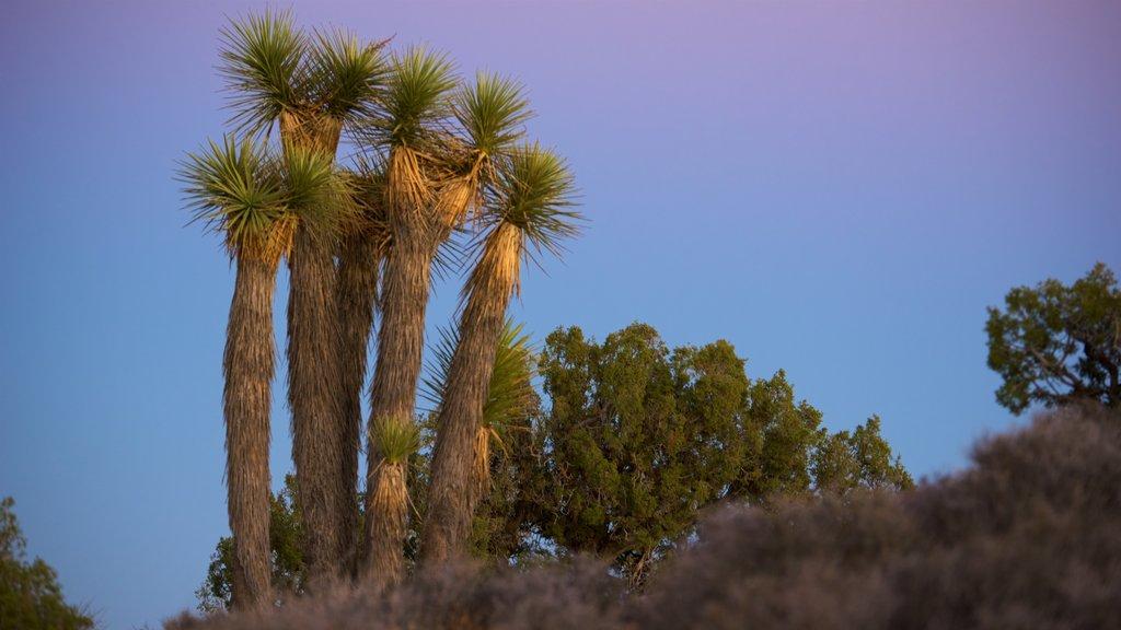 Parque Nacional Joshua Tree ofreciendo escenas tranquilas y una puesta de sol