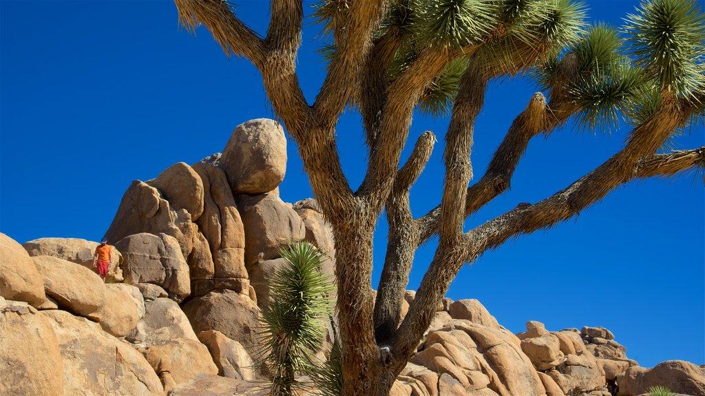 Parque Nacional Joshua Tree mostrando alpinismo y vistas al desierto y también un hombre