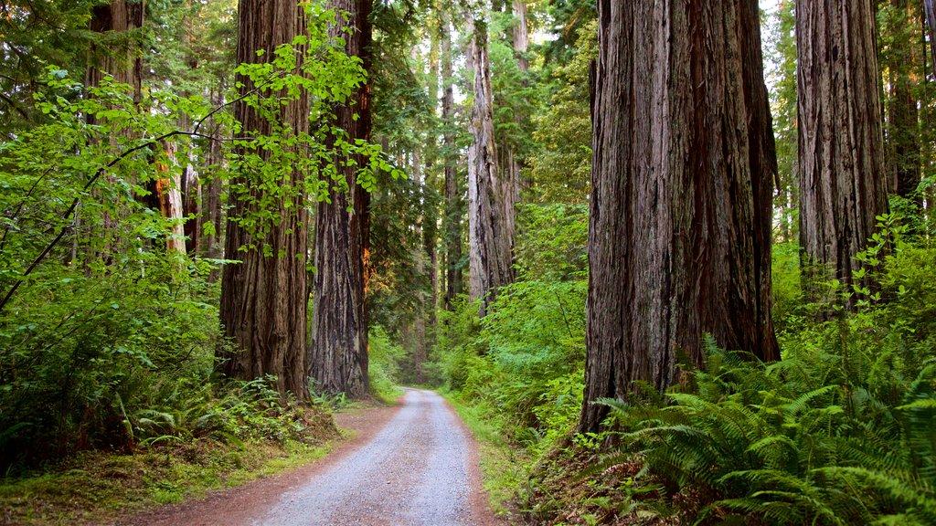 Parque nacional y parques estatales de Redwood