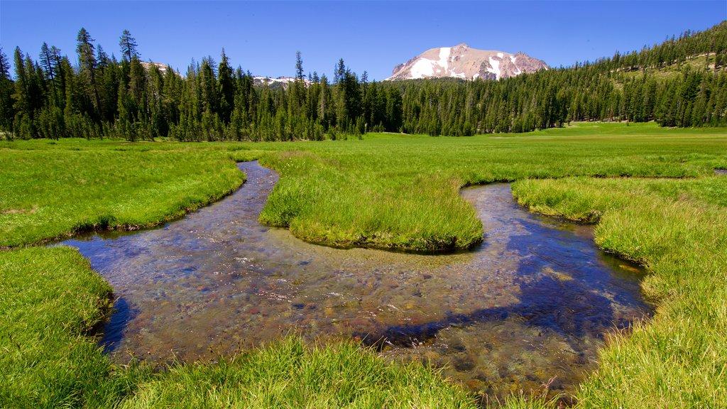 Mill Creek mostrando escenas forestales, un río o arroyo y escenas tranquilas