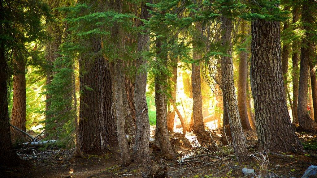 Mill Creek mostrando bosques