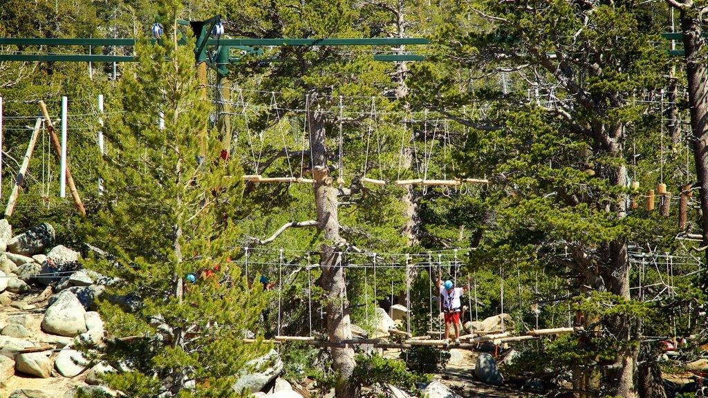 Heavenly Mountain Gondola