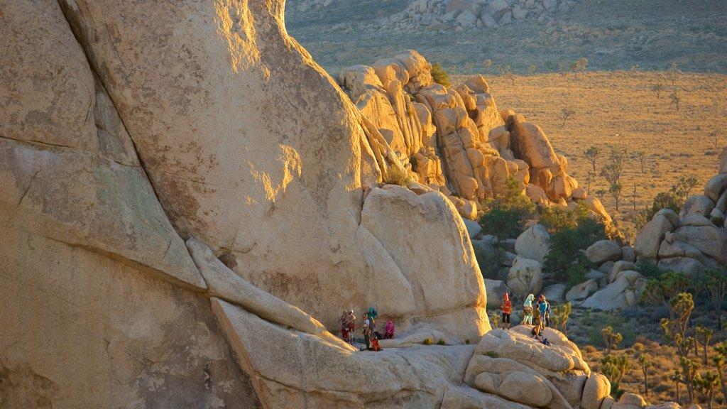 Parque Nacional Joshua Tree que incluye senderismo o caminata y vistas al desierto y también un pequeño grupo de personas