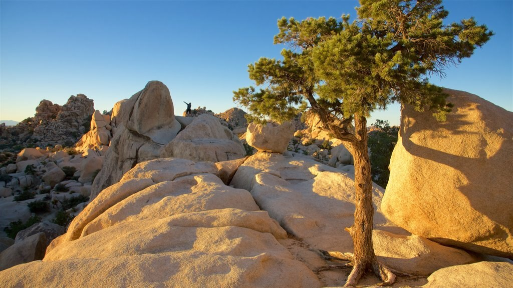 Parque Nacional Joshua Tree mostrando vistas al desierto