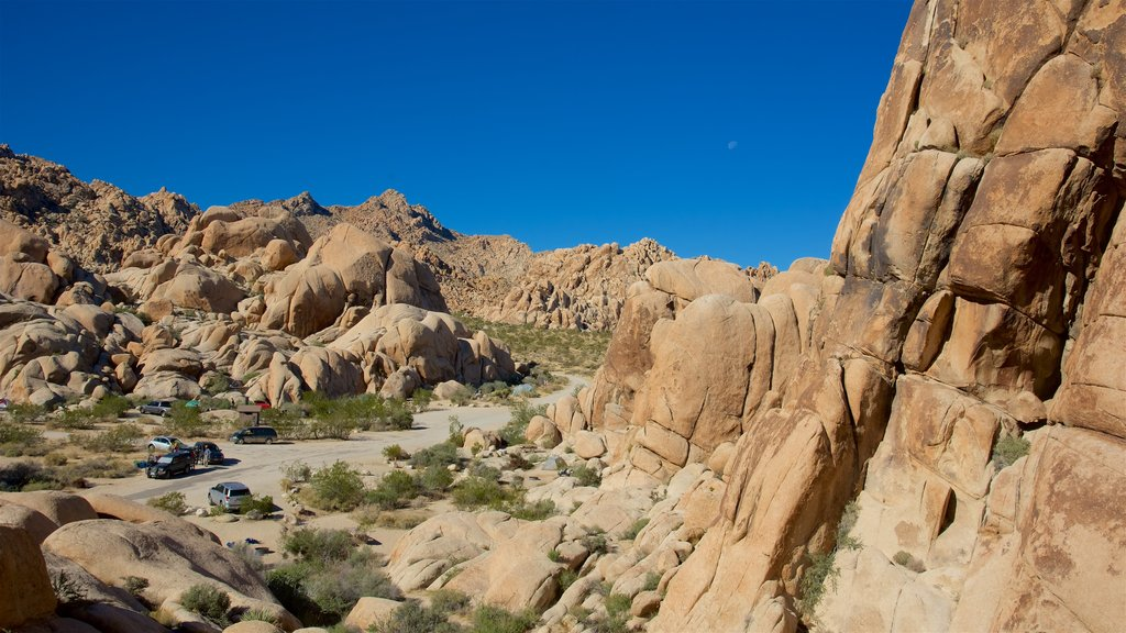 Joshua Tree National Park featuring tranquil scenes and desert views