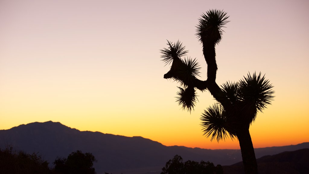 Joshua Tree National Park featuring a sunset and desert views
