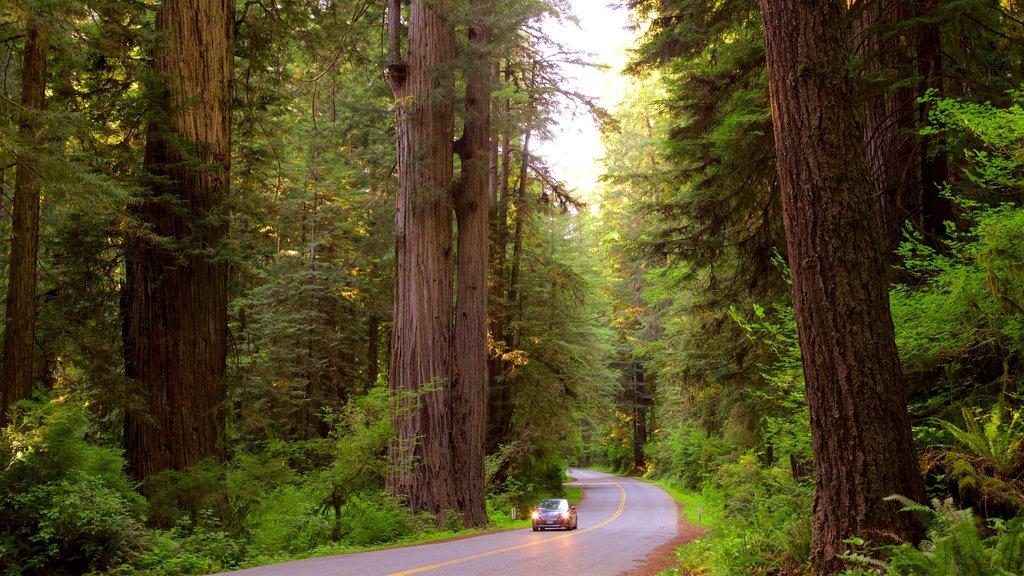 Parque nacional y parques estatales de Redwood ofreciendo bosques