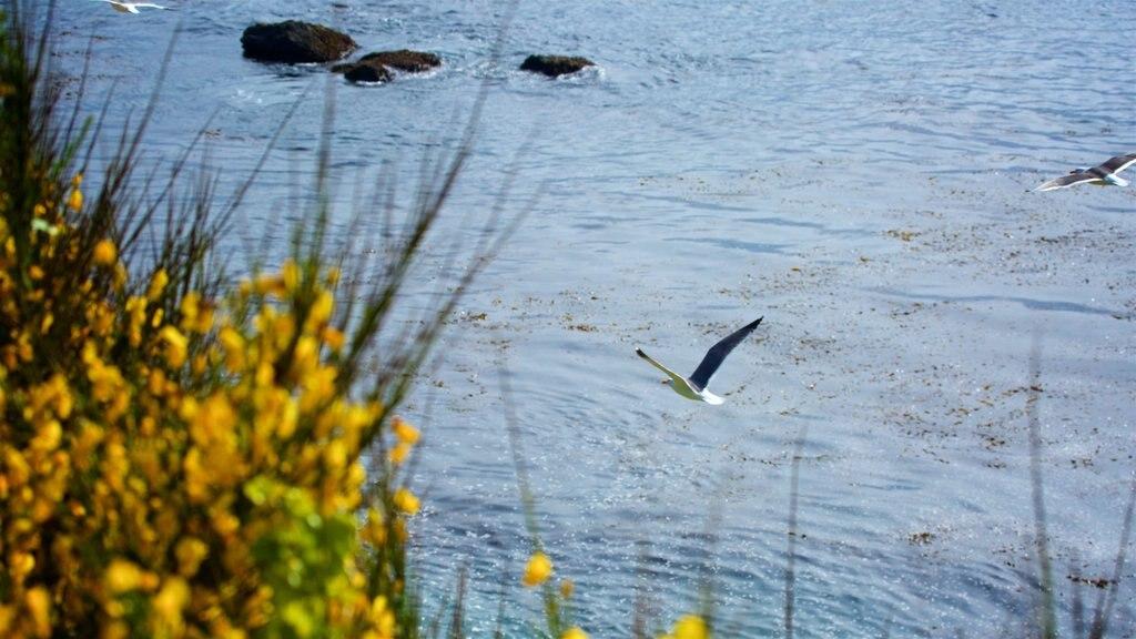Mendocino featuring general coastal views and bird life