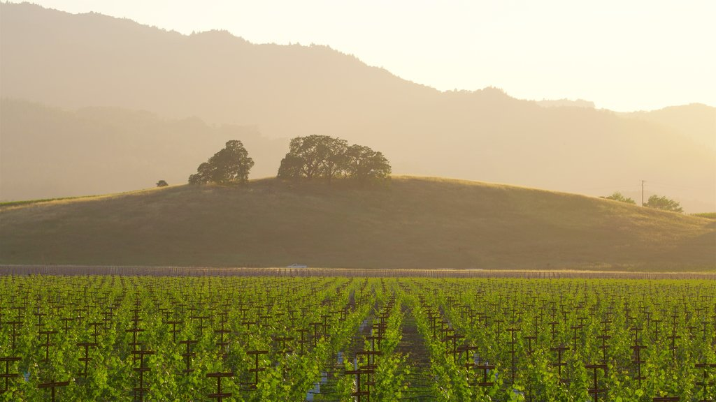 Napa which includes landscape views, tranquil scenes and a sunset