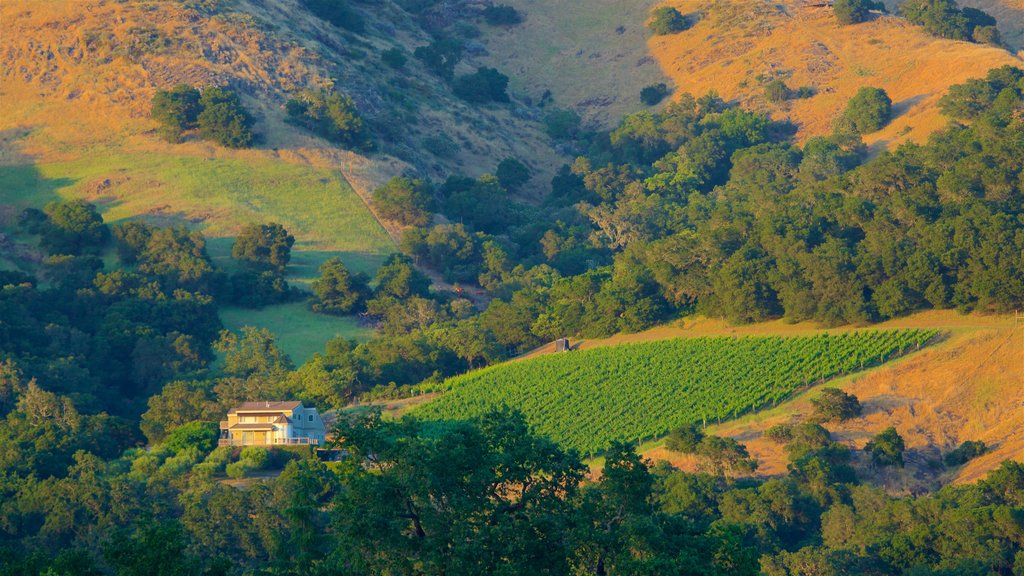 Napa featuring farmland and tranquil scenes