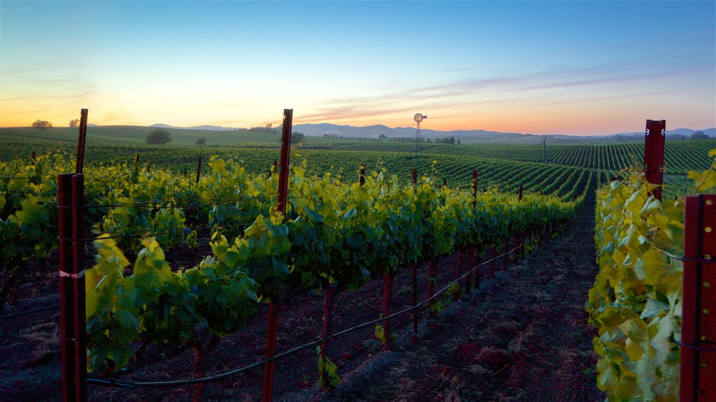 Napa featuring a sunset, tranquil scenes and farmland