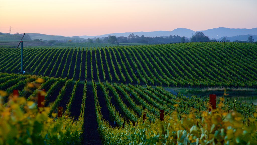 Napa showing farmland, tranquil scenes and a sunset