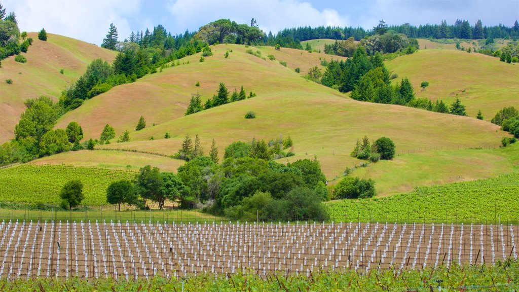 Navarro Vineyard and Winery featuring tranquil scenes, farmland and landscape views