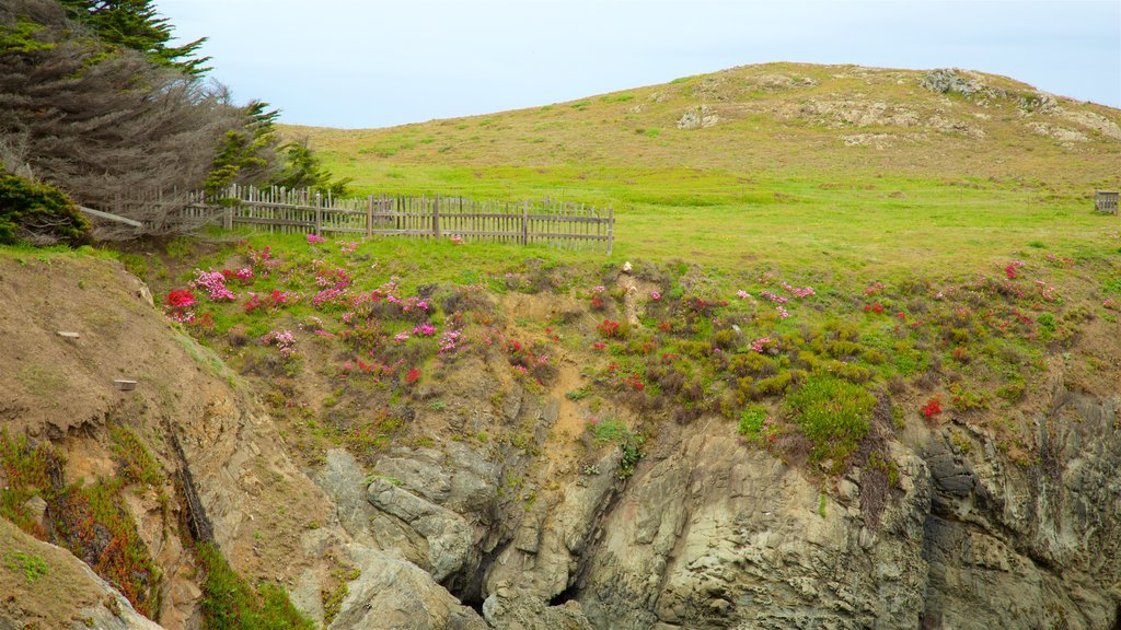 Mendocino Coast Botanical Gardens which includes tranquil scenes and wildflowers