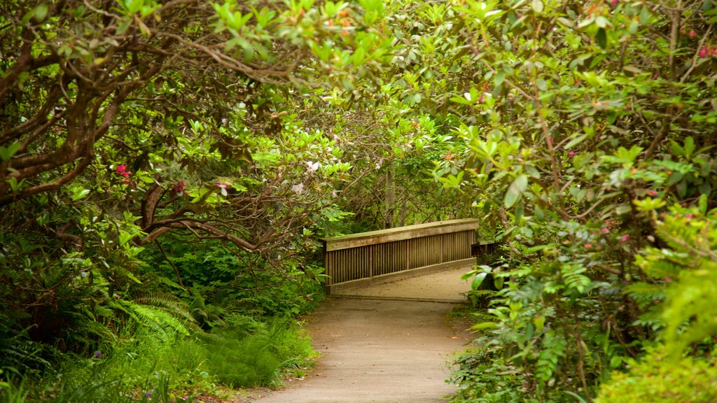 Mendocino Coast Botanical Gardens which includes a park and a bridge