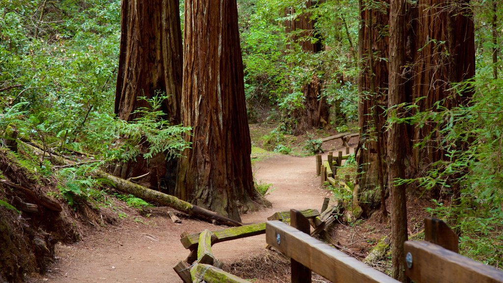 Armstrong Redwoods State Park showing forest scenes