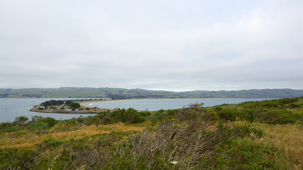 Bodega Head which includes tranquil scenes and a lake or waterhole