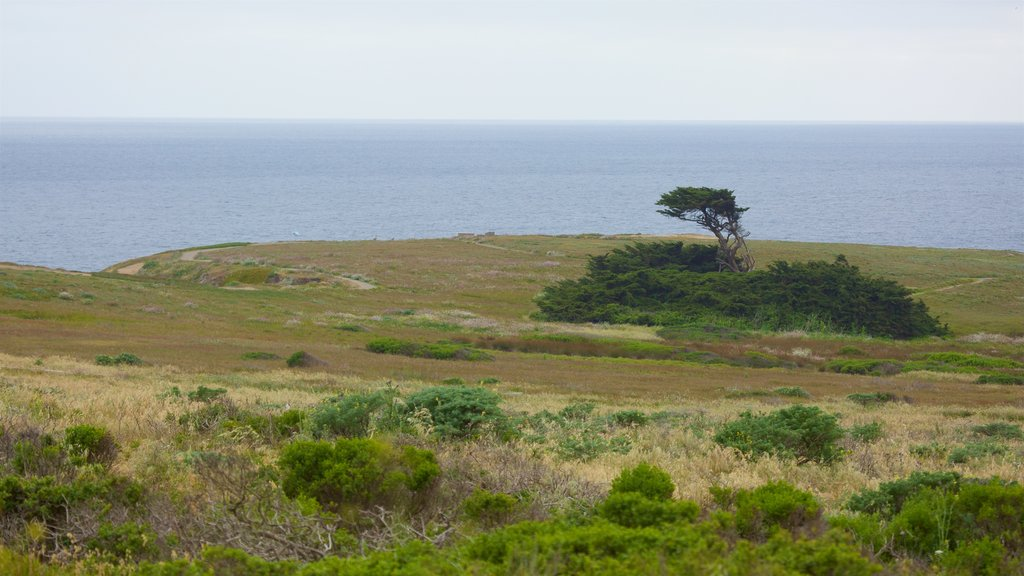 Bodega Head which includes tranquil scenes and general coastal views