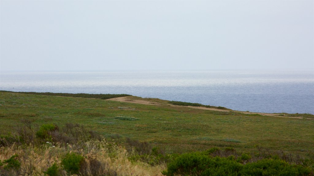 Bodega Head showing general coastal views