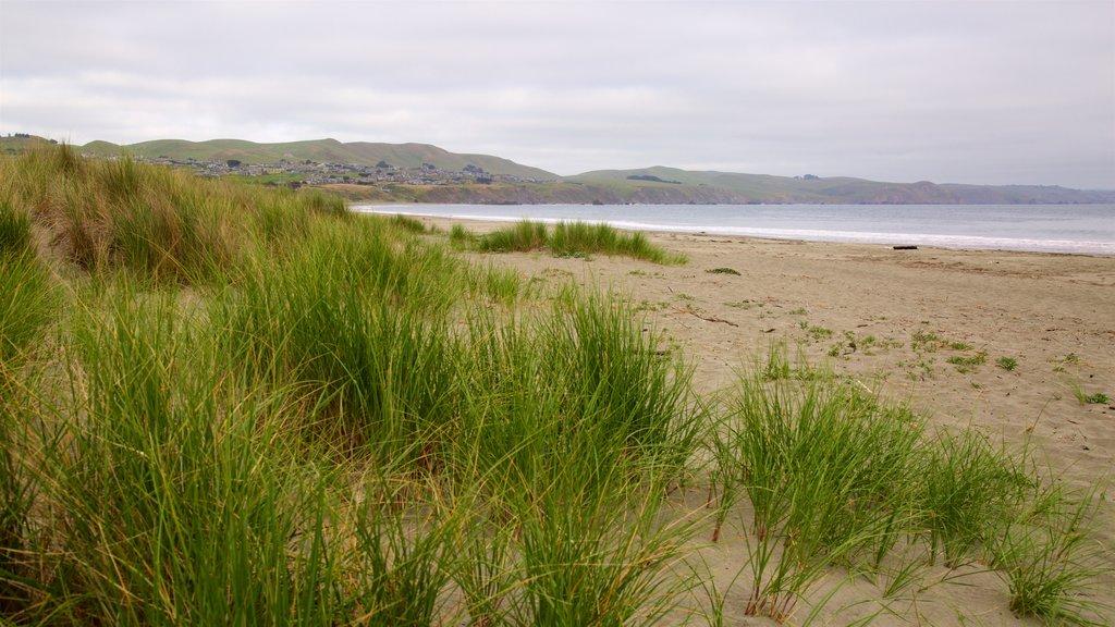 Doran Beach featuring general coastal views and a beach