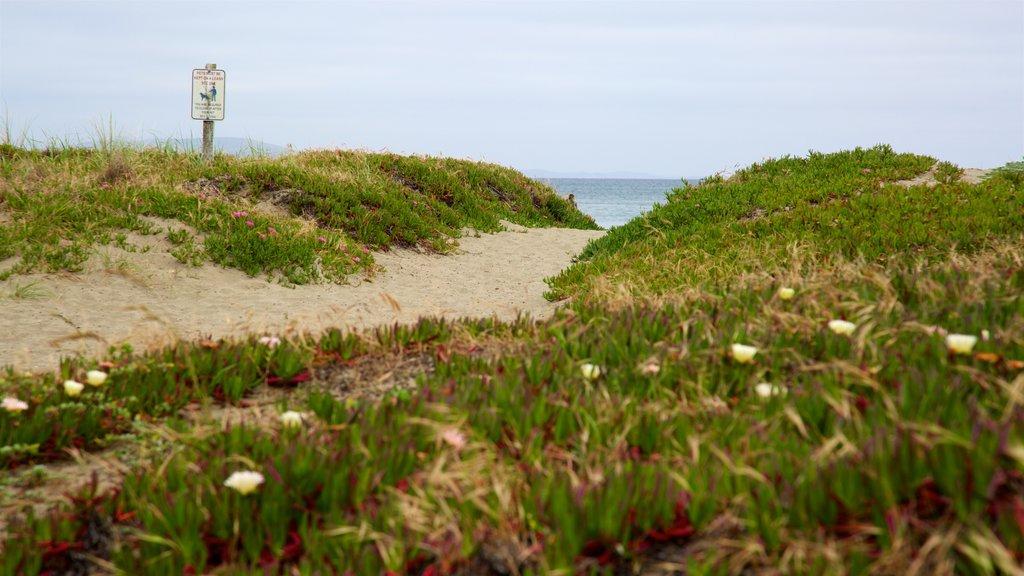 Doran Beach showing a beach, general coastal views and wildflowers