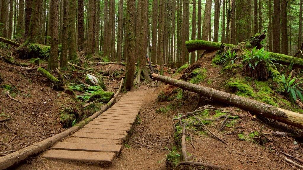 British Columbia featuring forest scenes