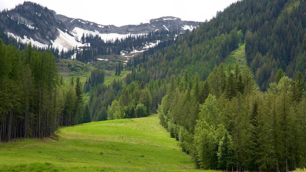 Fernie Alpine Resort which includes tranquil scenes
