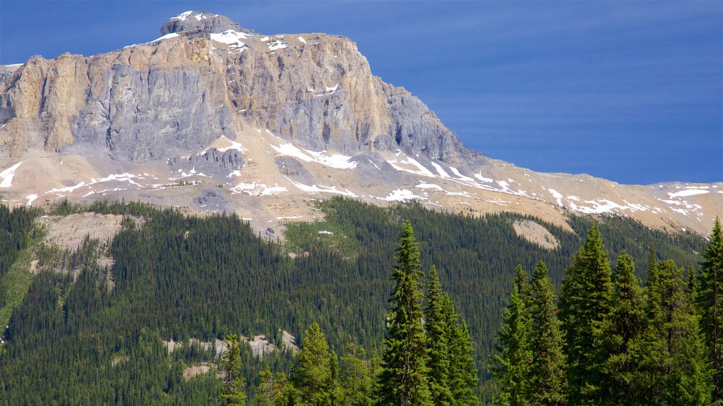 Yoho National Park featuring mountains and tranquil scenes