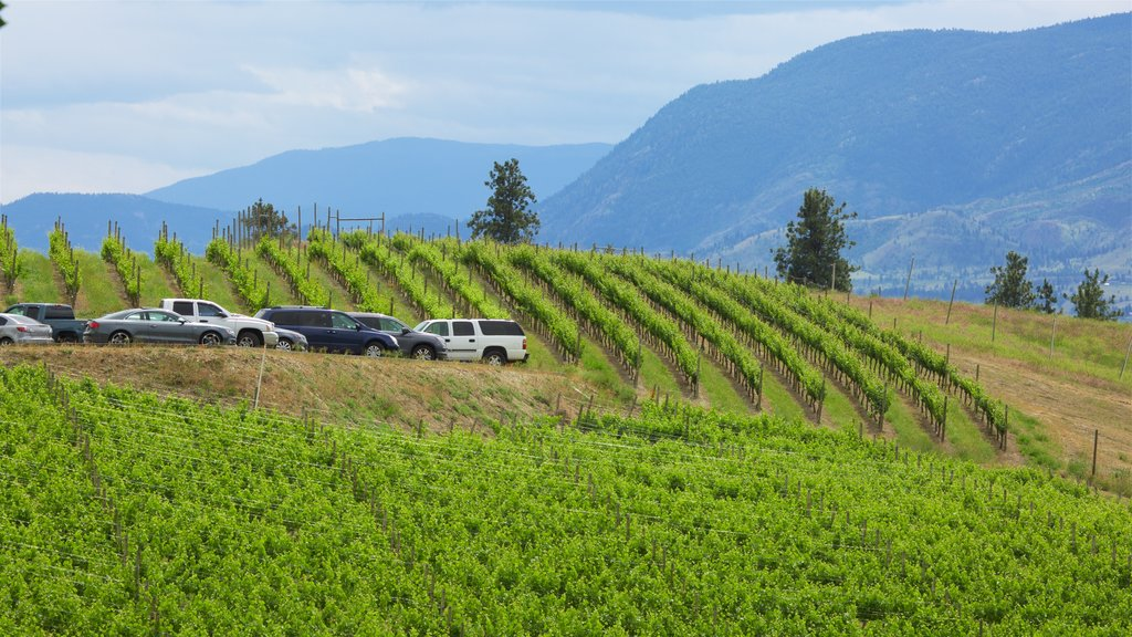 Penticton showing farmland and tranquil scenes