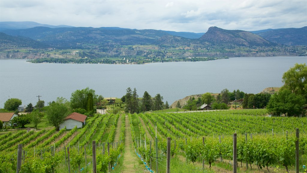 Penticton featuring a lake or waterhole, tranquil scenes and farmland