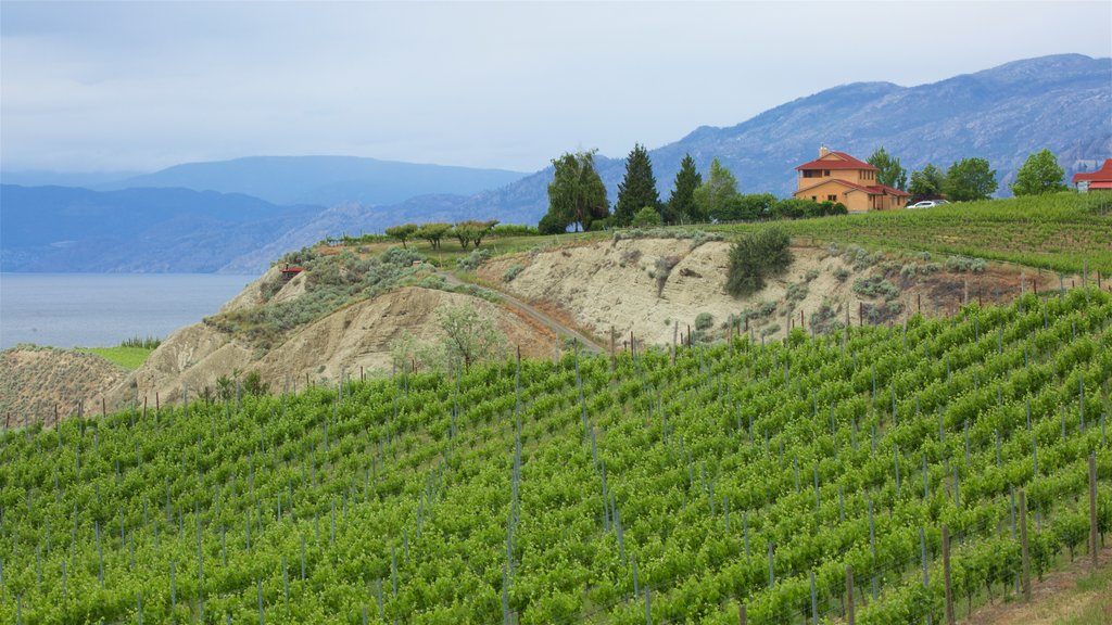 Penticton showing tranquil scenes and farmland
