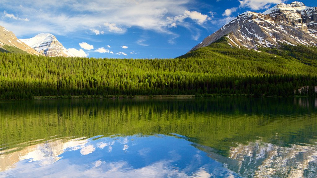 Yoho National Park which includes mountains, tranquil scenes and a river or creek