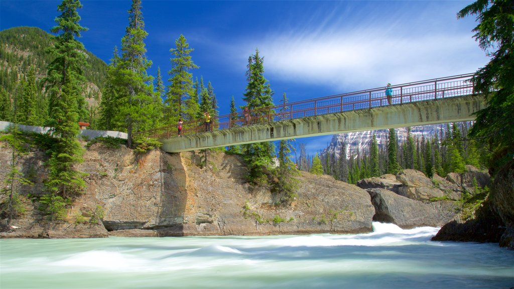 Yoho National Park featuring a bridge and a river or creek