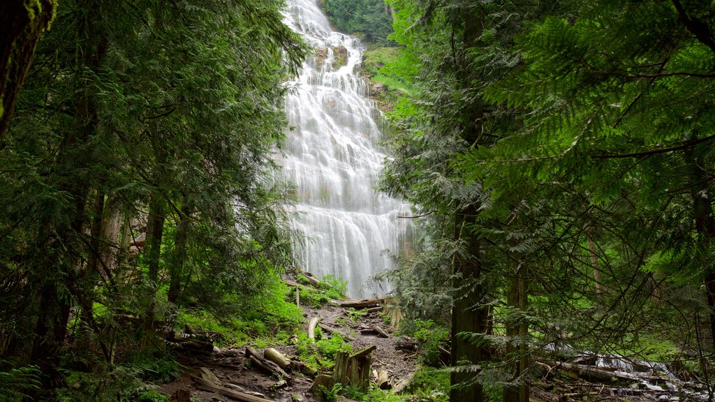 Bridal Veil Falls which includes forest scenes and a waterfall