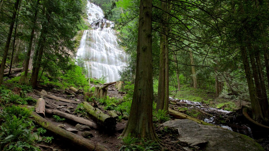 Bridal Veil Falls which includes a cascade and forest scenes