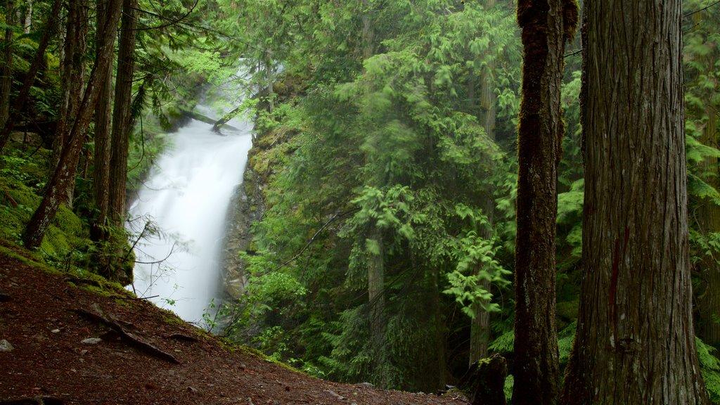 Kaslo mostrando una catarata y bosques
