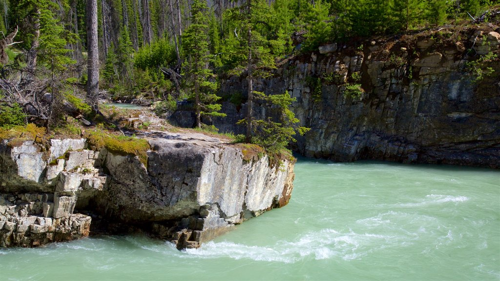 Kootenay National Park which includes forest scenes and a river or creek