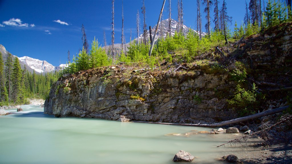 Kootenay National Park showing a river or creek and forests