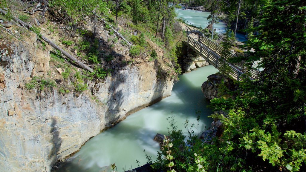 Kootenay National Park featuring a river or creek, a bridge and forest scenes