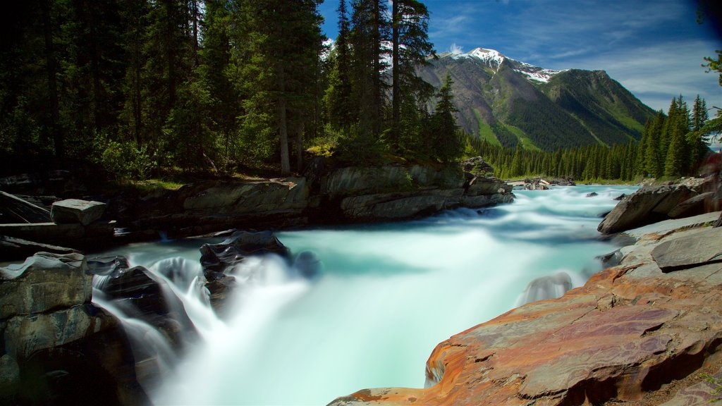 Kootenay National Park showing forest scenes, rapids and tranquil scenes
