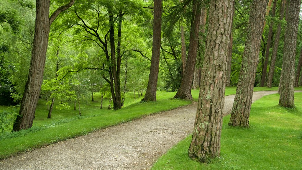 Amras featuring a park