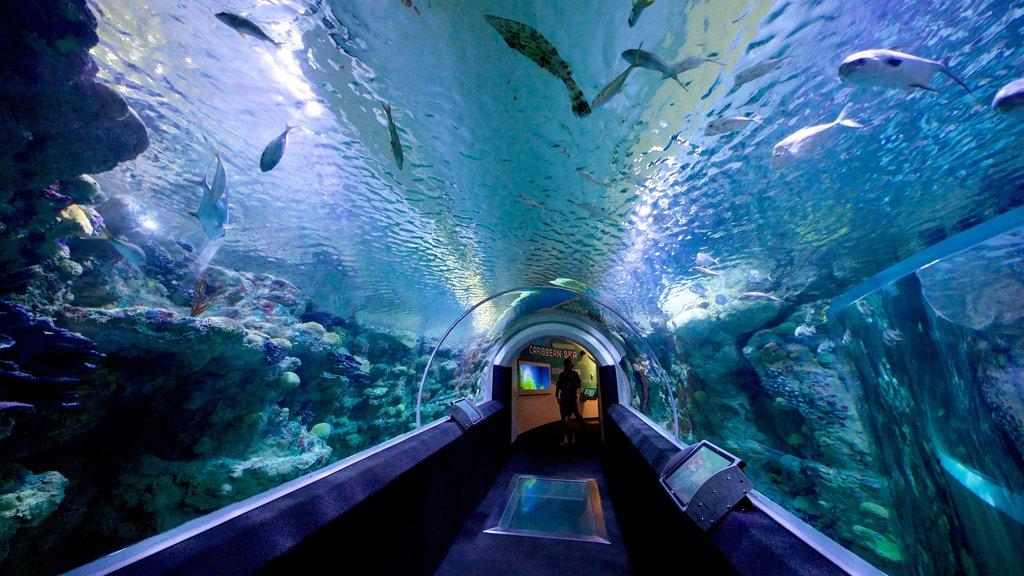 Discovery World que incluye vistas interiores y vida marina