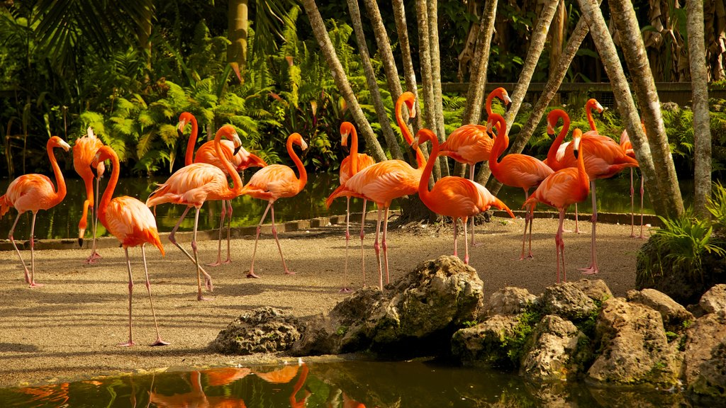 Flamingo Gardens featuring a pond, bird life and a park